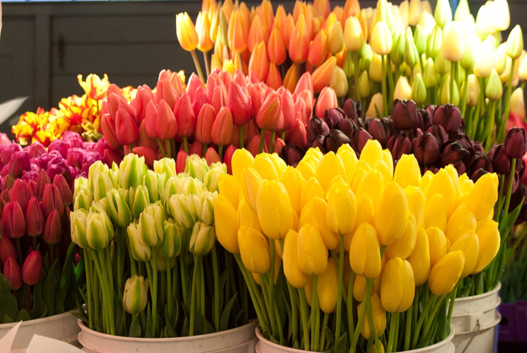 Миллион цветов картинки 5