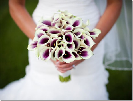 white and purple calla lilies
